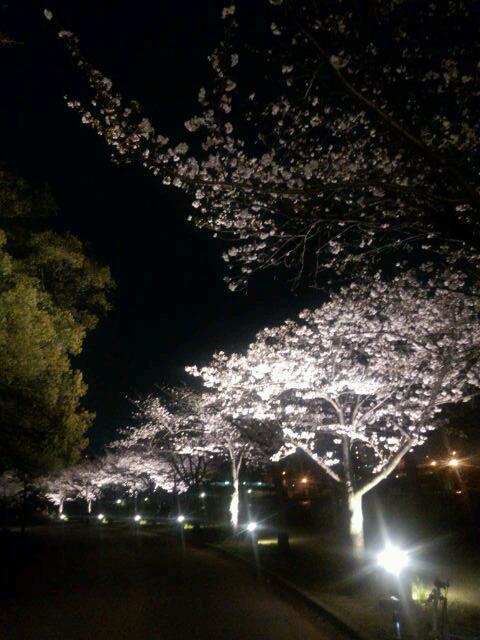 大阪では有名な大川の桜