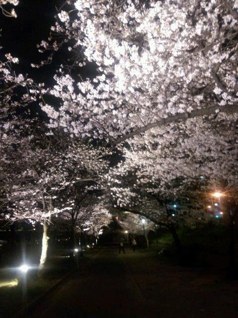 夜桜 大阪 桜の宮